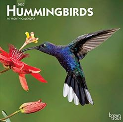 Hummingbirds 2012 Calendar